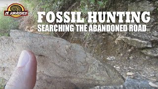 Fossil hunting - searching the abandoned road - 2017 07 20