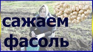 видео Агротехника фасоли