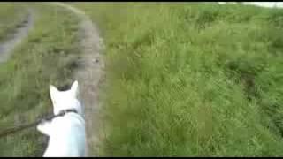 自作ステディカムを使用して撮影しました。滑らかな散歩映像が撮影でき...