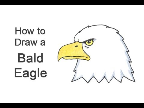 How To Draw A Bald Eagle Head (Cartoon)