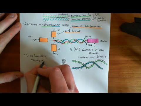The Basement Membrane Part 1