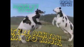 Tere Akhyan ka yo kajal,Funny Dance By Cows