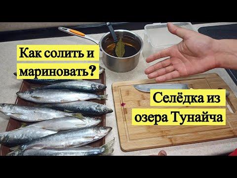 Как я готовлю селедку из озера Тунайча. Пряный посол и горчичный соус
