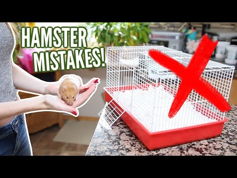 6 MISTAKES hamster owners make!