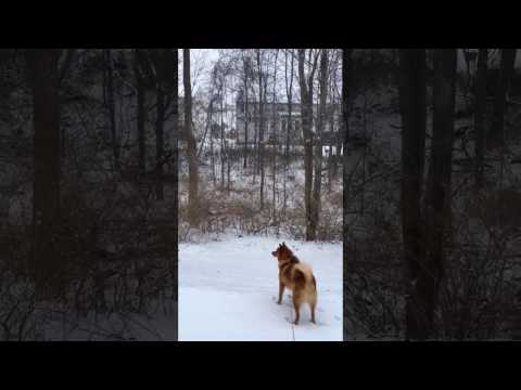 Barking dog barked at a herd of deer