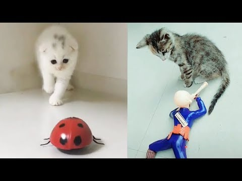 Cat Reaction to Cat Toy - Funny Cat Toy Reaction Compilation