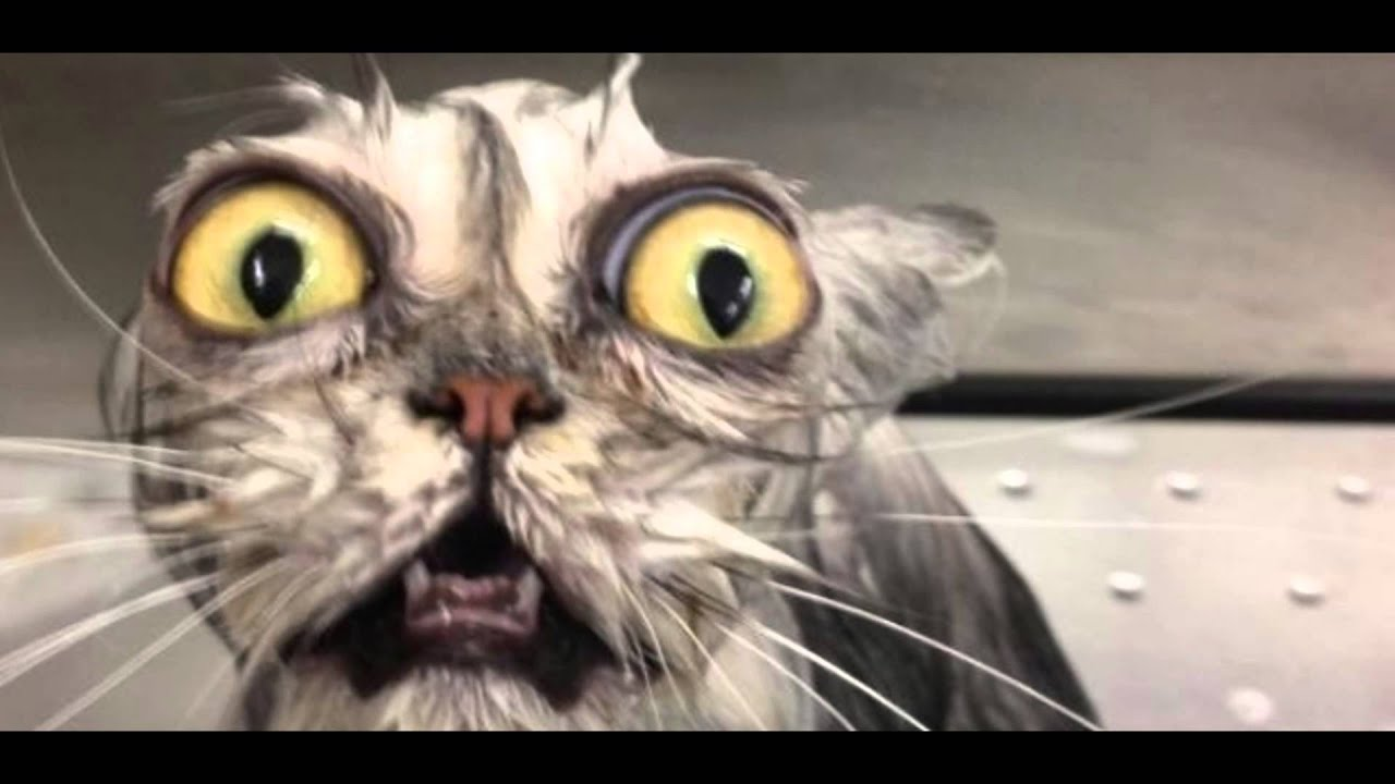 8 of the worlds ugliest cat s - YouTube