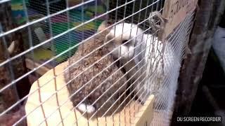 Порно кроликов