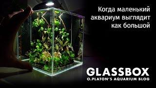 Когда маленький аквариум выглядит как большой