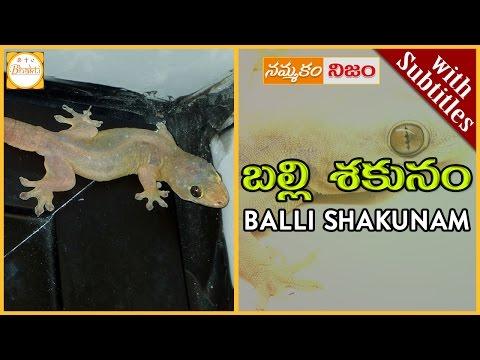 Lizard Science | Balli Shakunam w/subtitles|బల్లి మీద పడిందా|Superstition or Belief|Nammakam Nijam