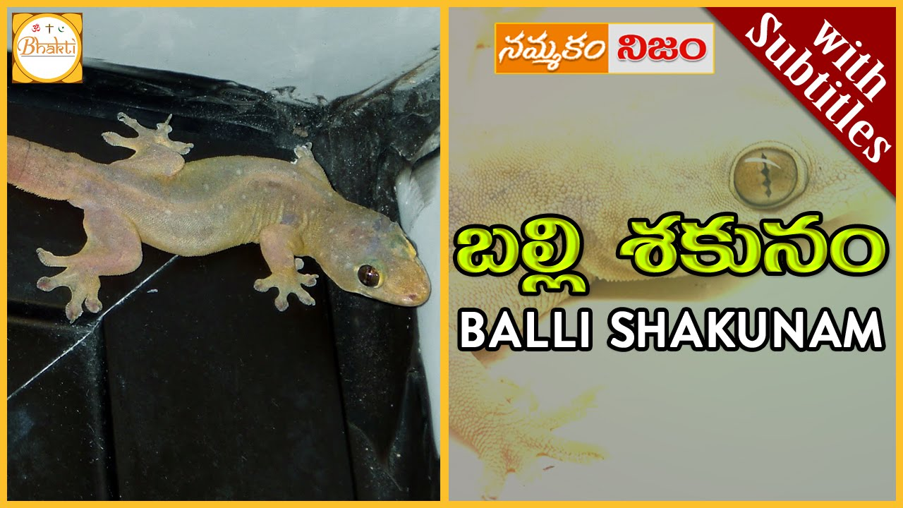 Lizard Science | Balli Shakunam w/subtitles|బల్లి మీద పడిందా|Superstition  or Belief|Nammakam Nijam