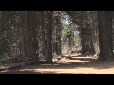 Polipoli State Park Redwood Forest Trail Virtual Maui Guide