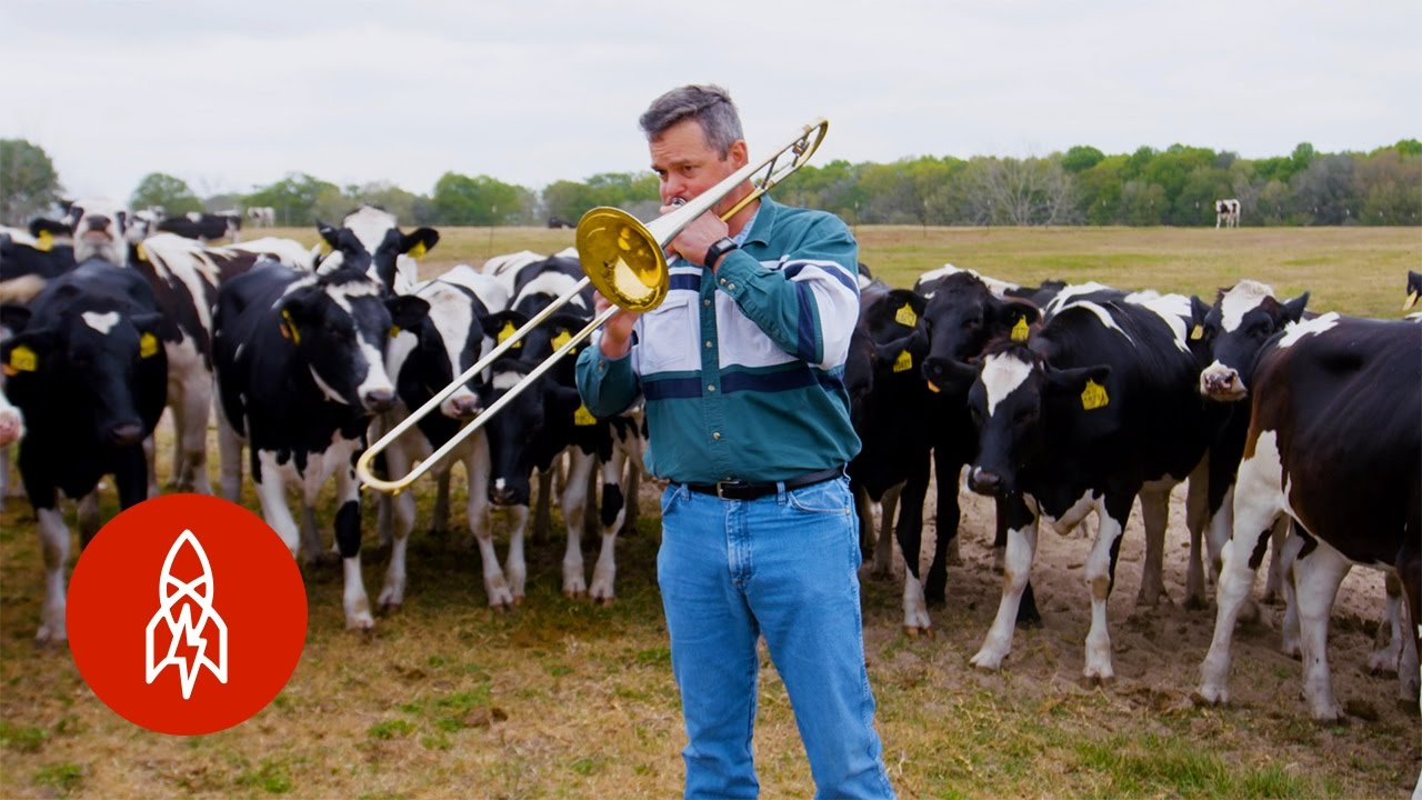 cows dig jazz youtube