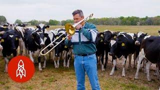 Cows Dig Jazz