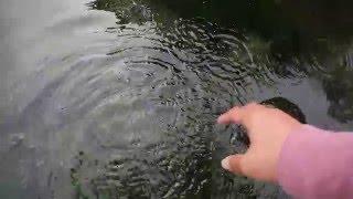 【ツカ温泉】北海道 屈斜路湖 和琴露天温泉2015【無料】