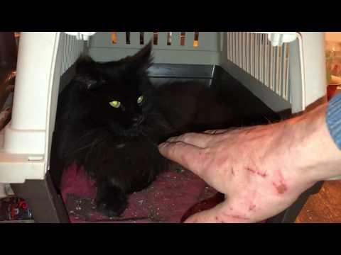Вопрос: Кот агрессивный, кусает и кидается. Что делать?