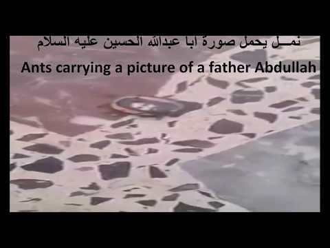 النمل يحمل صورة ابا عبدالله الحسين ع Ants carrying a picture of a father Abdullah Hussein