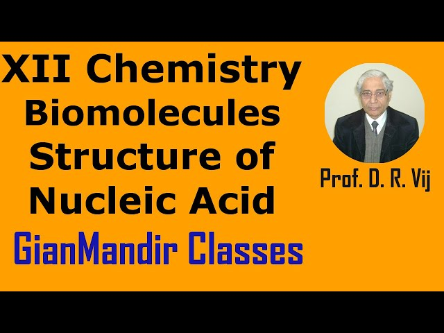 XII Chemistry | Biomolecules | Structure of Nucleic Acid by Gourav Sir