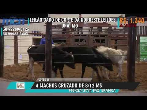 TRADICIONAL LEILÃO GADO DE CORTE DA NOROESTE LEILOES EM UNAI MG
