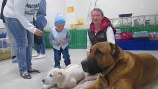 Маленький участник презентации не хочет уходить от наших собак