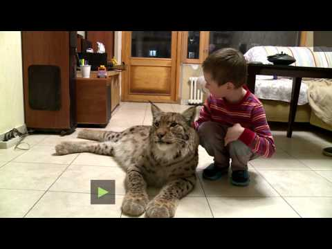From fur hat to house pet: Lynx lives in Moscow apt after be