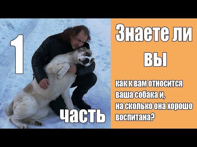 [Часть 1] Взаимоотношения с вашей собакой
