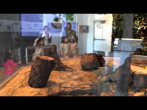 Otter poop