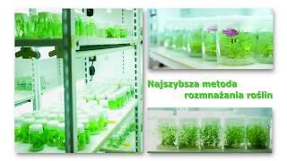 Katedra Genetyki Hodowli i  Biotechnologii Roślin WKŚiR ZUT