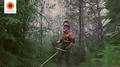 Nuoren metsän kunnostus