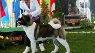 37 Dog Breeds (rase De Caini) Satu Mare