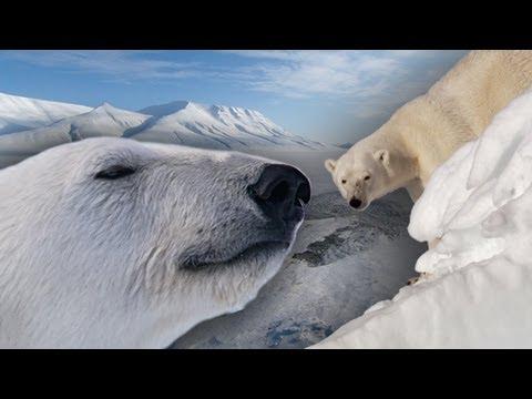 Polar Bears battle the Arctic Meltdown - Earth Files (Ep 3) - Earth Unplugged