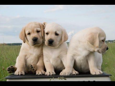 Умилительные щенки-дворняжки - YouTube
