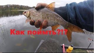 видео Плотва. Плотва Мурманской области. Зимняя ловля плотвы