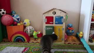 Какие игрушки выберет енот?