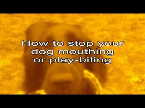 How to stop your dog biting and mouthing