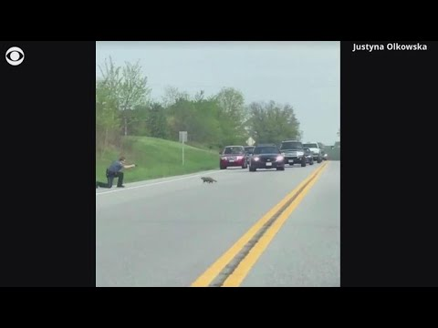Video shows officer shoot groundhog as it crosses the road