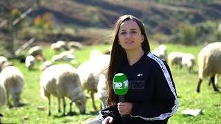 Çobanët në zhdukje/ Puna e bariut nuk preferohet nga të rinjtë