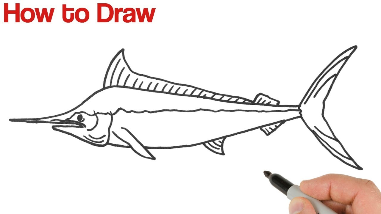 How to Draw Blue Marlin Fish   Animals Drawings for Beginners