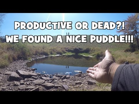 Puddle Fishing from YouTube · High Definition · Duration:  9 minutes 19 seconds  · 1.448.000+ views · uploaded on 22.09.2015 · uploaded by 618 Fishing