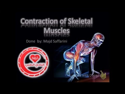 molecular mechanism of muscle contraction