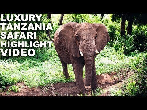 Luxury Tanzania Safari Serengeti Travel Highlight Video