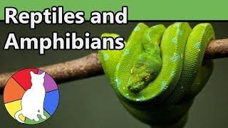 Reptiles and Amphibians | Animal Fact Files