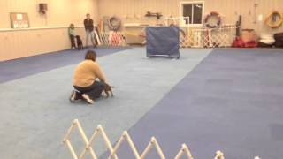 Clip From Fieldwood Dog Training Center Puppy Class