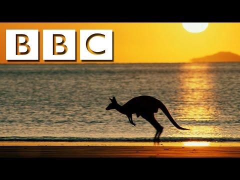 New Documentaries 2016 || Kangaroo Documentary 2016 HD