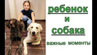 важный момент ребенка и собаки. Как подружить ребенка и собаку - маленькие секреты