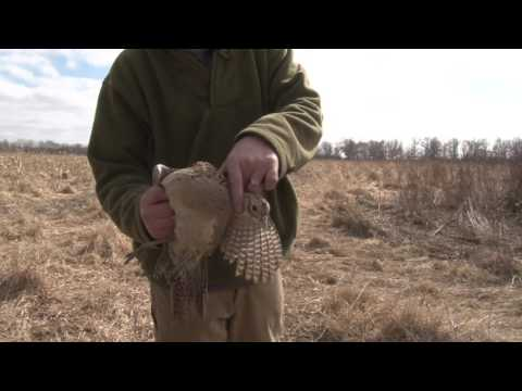 Building a Bird Cylinder Course - Hunting Dog Training
