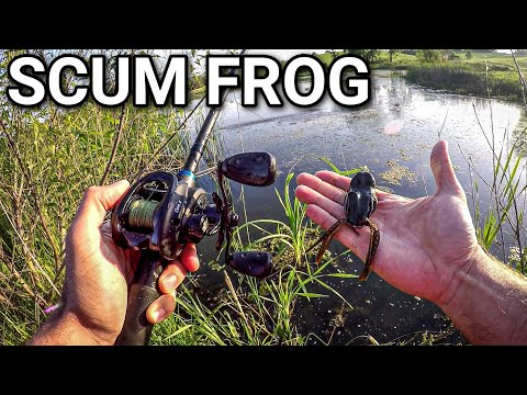Frog Fishing For Hungry Post-Spawn Bass (Scum Frog Trophy Series)