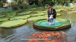 Vietnam Travel Amazing Giant Lotus Leaf in Mekong Delta ( Chua La Sen )