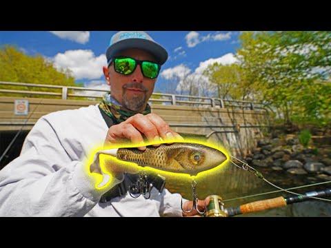 Bridge Fishing Glidebaits - UNEXPECTED Results!!