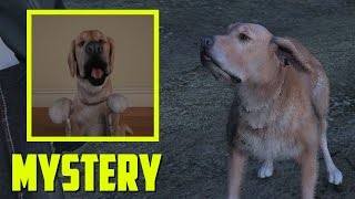 MICHAEL'S MYSTERIOUS DOG EASTER EGG!  (GTA 5 Easter Eggs And Secrets)